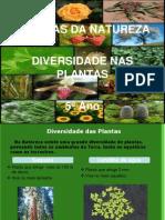 diversidade nas plantas 5.º ano