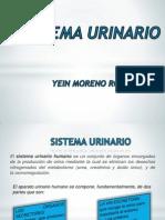 Sistema Urinario Diapositivas