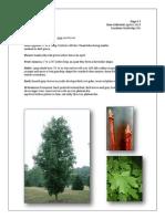 Placement Herbarium - Word Template