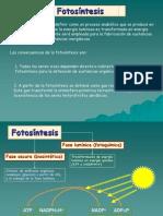 Fotosintesis Clases