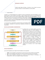 Sistema Neuroendocrino Hipotalamo e Hipofisis