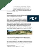Bosque Comestible - Resumen Arboretum