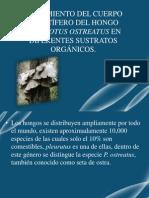 Pleourutos ostreatus.pptx