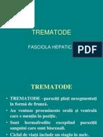 Trematode Fasciola