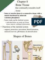 8 Bone Tissue