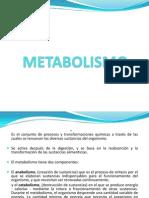 Metabolismo y Nutricion