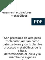 enzimas  activadores metabólicos