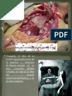 Tanatologia forenseFINAL