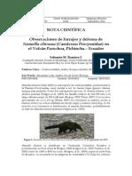 03Ramirez Forrajeo Defensa Nassuella PDF