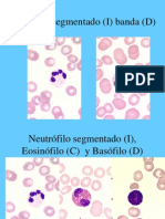Imagenes de Hematologia