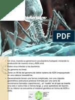 Bacterofagos, Bacterias, Cianobacterias...