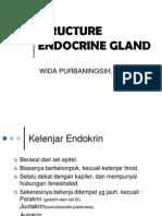 Structure Endocrine Gland