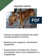 Erliquiose Canina