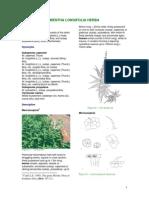 Mentha Longifolia Herba