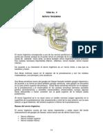 TEMA 9 Anatomía humana