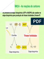 Etapa Bioquímica da Fotossíntese