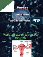 aparato-reproductor-femenino-1225822657232187-9