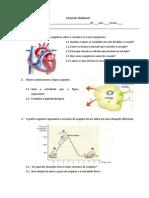 sist.circulatório e respiração celular