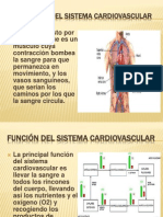 Exposicion Sistema Cardiovascular Cata