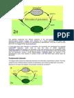 Fertilization in Flowering Plants