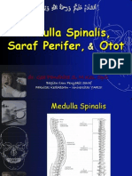Medula Spinalis - Saraf Tepi - Otot