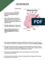 dr mohtaseb slide 8 embryology 3