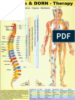 Meridians BLueprint in relation to spinal Dorn therapy