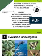 Evolucion Convergente