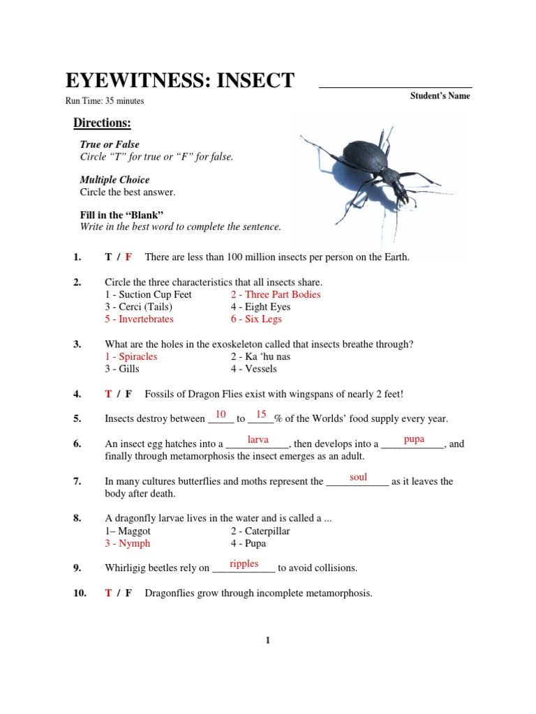 worksheet Metamorphosis Worksheet eyewitness insect worksheet key beetle insects