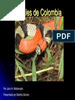 Serpientes Coral de Colombia