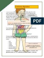 El Sistema Digestivo Apuntes Alumnos