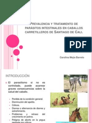 parásitos internos en el tratamiento de caballos