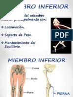 Huesos de La Pierna i f