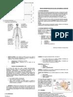 DESARROLLO COGNITIVO Y MOTOR TEMA 3 Bases Neurofisiologicas