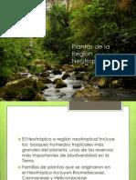 Plantas de La Region Neotropical