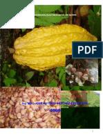 manual cacao toño ultimo Septiembre