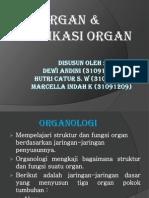 Biologi Perkembangan - Organ & Modifikasi Organ Tumbuhan