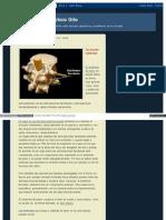 Elblogdepacogilo Blogspot Com 2008-11-01 Archive HTML