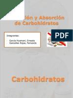 Digestión y Absorción de Carbohidratos (E)