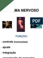 aula 2- SISTEMA NERVOSO Fisio Humana.ppt