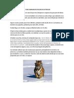 El Tigre Siberiano en Peligro de Extincion