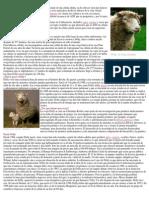 La clonación de la oveja Dolly
