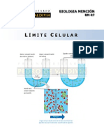 Limite Celular