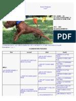 100% Bulldog - American Pit Bull Terrier