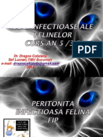 Curs An5 Pisici Peritonita Infectioasa Felina