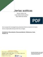 Bacterias acéticas