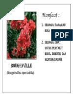 Bougenville.pdf