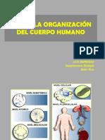 tema-1organizacic3b3n-del-cuerpo-humano.pdf