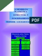la-membrana-plasmática-1-medios-biologia