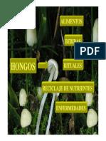 clase_2_hongos_2013[2](1).pdf